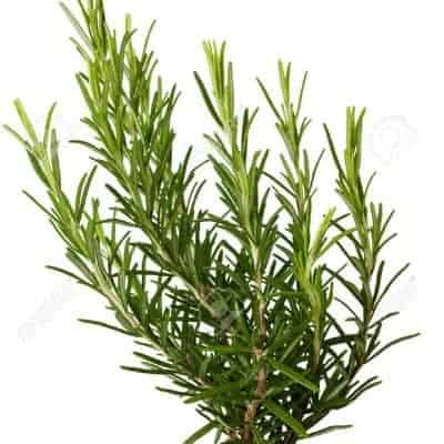 Rosemary, Fluid Extract, 1:2, 50ml